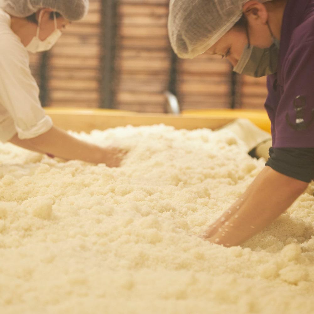 麹菌が均一に付きやすくするよう、蒸した米をほぐしていきます